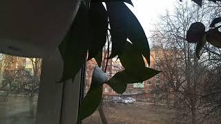 Комнатные растения. Новости с подоконника на конец марта. Обзор всех моих растений 1 часть