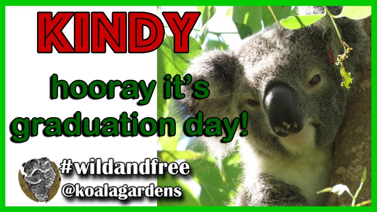 Koala Kindy Graduation Day