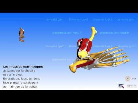 Comme traiter les distensions des muscles des pieds