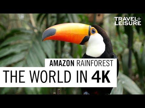 Amazon Rainforest   The World in 4K   Travel + Leisure