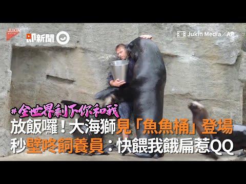大海獅見「魚魚桶」登場 秒壁咚飼養員:快餵我餓扁惹