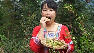 这种变异的树叶,农村姑娘从树上摘下就咬了一大口,你吃吗