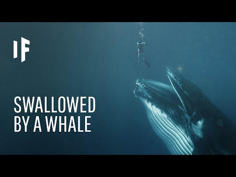What Would Happen If You Got Swallowed by a Whale?