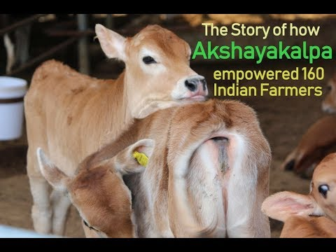 How did Akshayakalpa increase the monthly income of farmers from ...