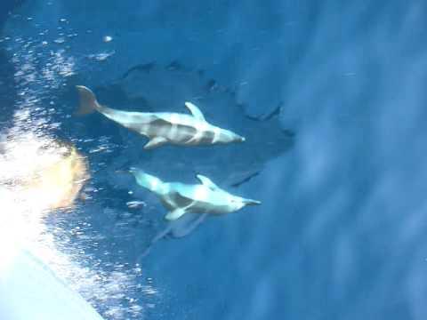 Kaarten met dolfijnen, 3 Dolphins Playing Full Speed Skopelos Juli 2011