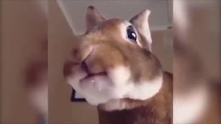 Очень смешные животные. Забавные моменты