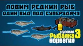 Русская Рыбалка 3. Ловим редкости.
