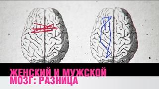 Разница между женским и мужским мозгом