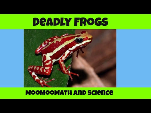 Deadly Poisonous Frogs-Kissing these Frogs could Kill You