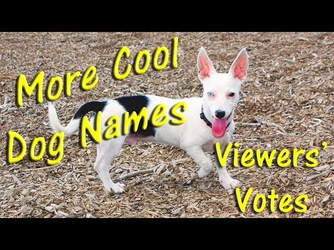 🐶COOLEST DOG NAMES 👀 YOUTUBE VIEWERS VOTES LISTED! Puppy Names 👈