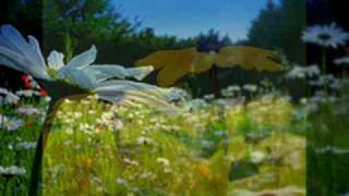 WILDFLOWERS  ~  TOM PETTY AND THE HEARTBREAKERS   ~  FOR CHARISSE  ~  (Lyrics)