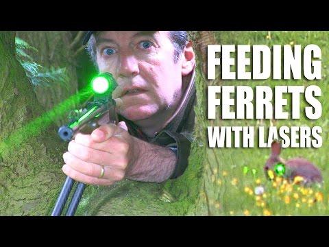 Feeding Ferrets with Lasers