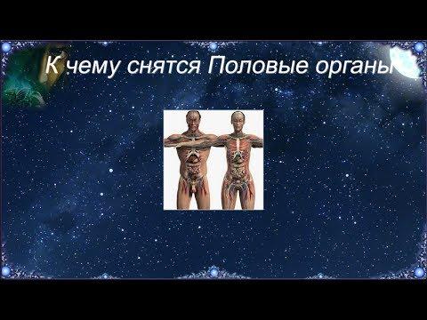 К чему снятся Половые органы (Сонник)