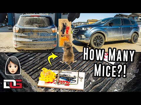 , title : 'Cleaning A Farm Girl's Vehicle That Was INFESTED With Mice...