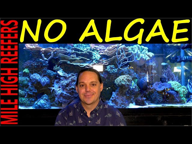 Algae how to control, stop and prevent it in your reef tank