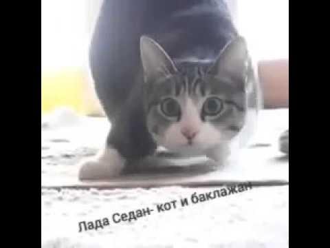 Лада Седан-кот и баклажан