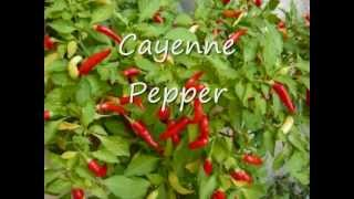 Natural Herbs for DIABETES (medicinal  herbs)