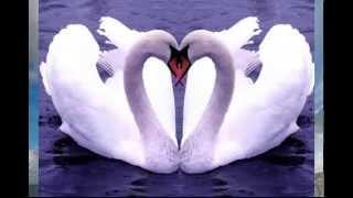 На планете любви двое!