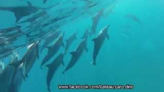 preview picture of video 'Nager avec les dauphins à l'ile Maurice Tamarin-Excursion en bateau avec Caro et Dino du 20/07/2014'