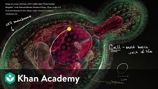 Grade 7 Science | Introduction to the cell | Khan Academy