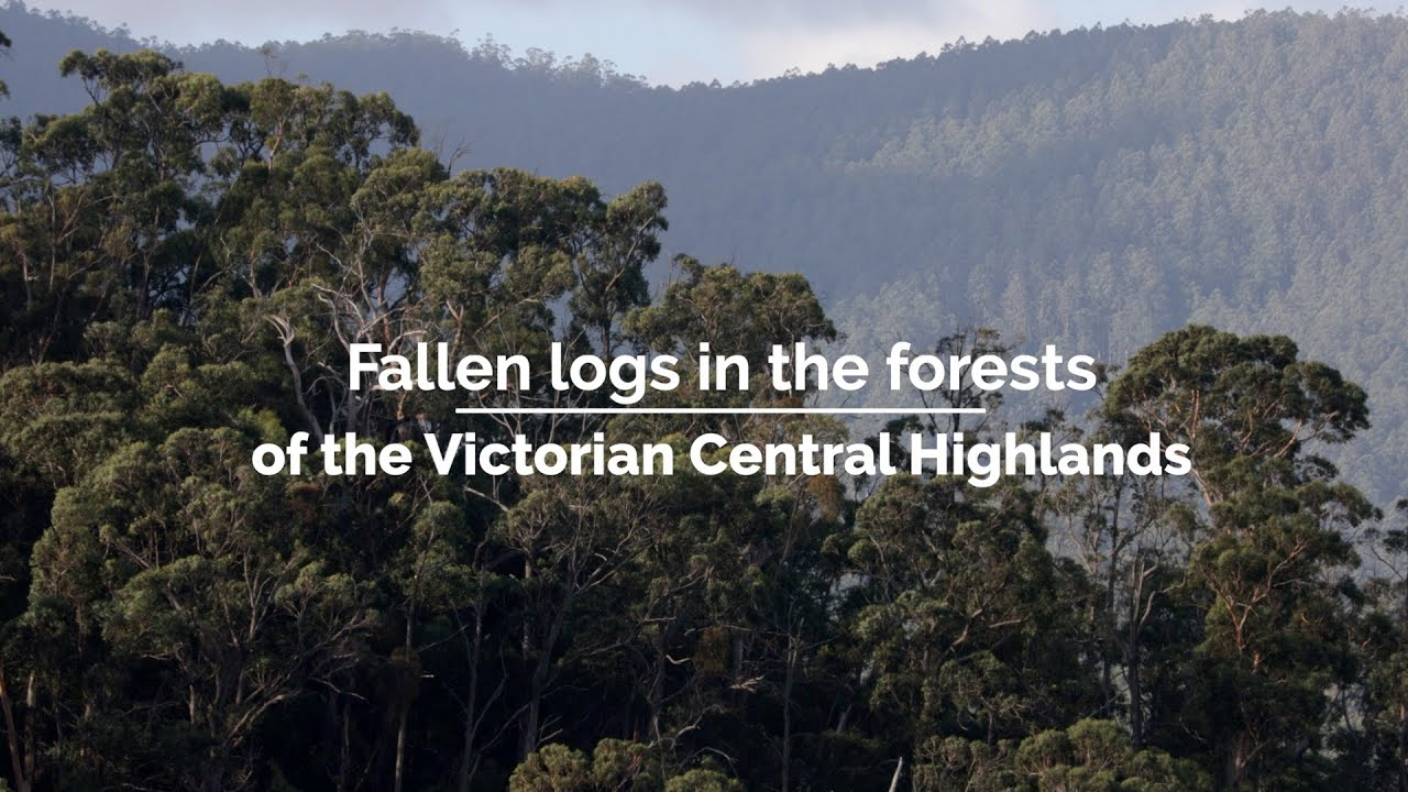 Fallen logs in the forests of the Victorian Central Highlands