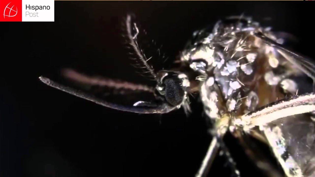 Conversamos con una embarazada que se contagió de Zika en Colombia