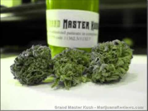 Palm Beach Kush video