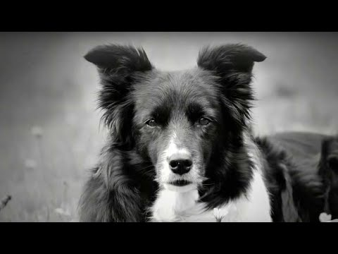 OneMind Dogs - Dog Training Methodology - YouTube