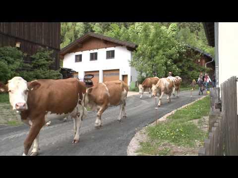 romantischer Bauernhofurlaub im Salzburgerland