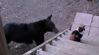 Cats Gone Wild: Cats Being Jerks - Cats Behaving Badly - Funny Cats