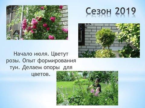 Начало июля  Цветут розы  Опыт формирования туи  Делаем опоры для цветов