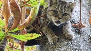 Meow, Help me! Kitten