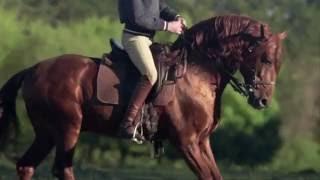 Fédération Française d'Equitation - Mon rêve devient réalité