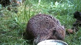 Wildlife Trail Camera - 14.6.2019