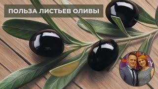 Листья оливы: польза,вред,противопоказания,применение,отзывы - экстракт листа оливы в капсулах НСП