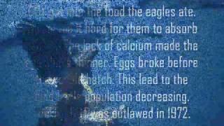 Endangered Species: The Bald Eagle