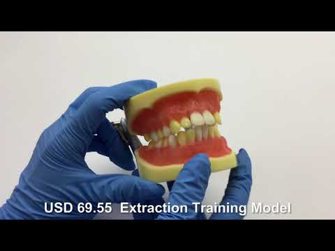 Extraction Training Model