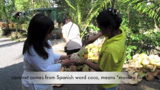 How to Open a Coconut Husk- Thai Style