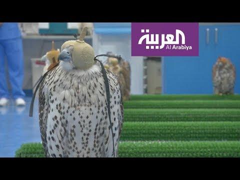 العرب اليوم - افتتاح أكبر مستشفى لعلاج الصقور في أبوظبي