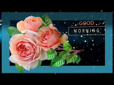 ✅Good morning✅Beautiful Roses for you✅Whatsapp, Wishes, Quotes, Message, Greetings