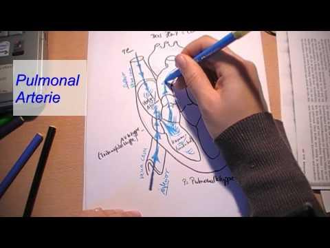 Wie den Schmerz in der Brustwirbelsäule zu verringern