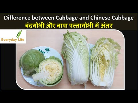, title : 'Difference between Cabbage & Chinese Cabbage | पत्तागोभी  और नापा पत्तागोभी में अंतर | Everyday Life