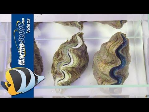 Sanggol na 1 taon 6 na buwan worm