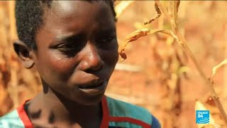 Child Labourers In Malawi Suffer From Tobacco Poisoning
