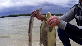 Kłusowanie ryb prądem.