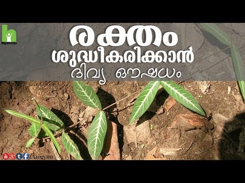 mp4 Health Tips Malayalam Images, download Health Tips Malayalam Images video klip Health Tips Malayalam Images