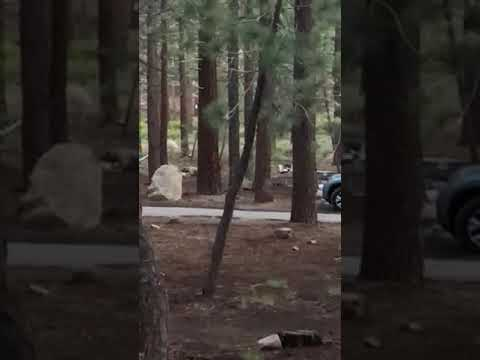 bear at another campsite