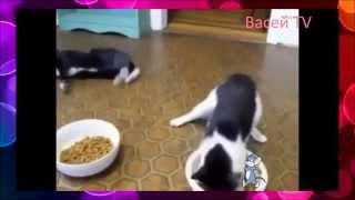 Угарная нарезка  Пьяный кот и другие