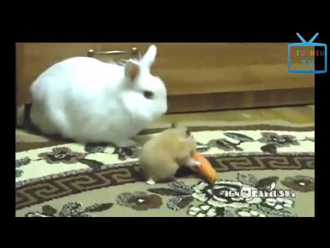 Funny Animal Mating - Funny Videos Of Bad Animals Doing Stupid Things