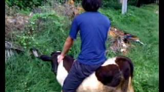 preview picture of video 'El Jinete de Vacas - Lambaré (Paraguay)'